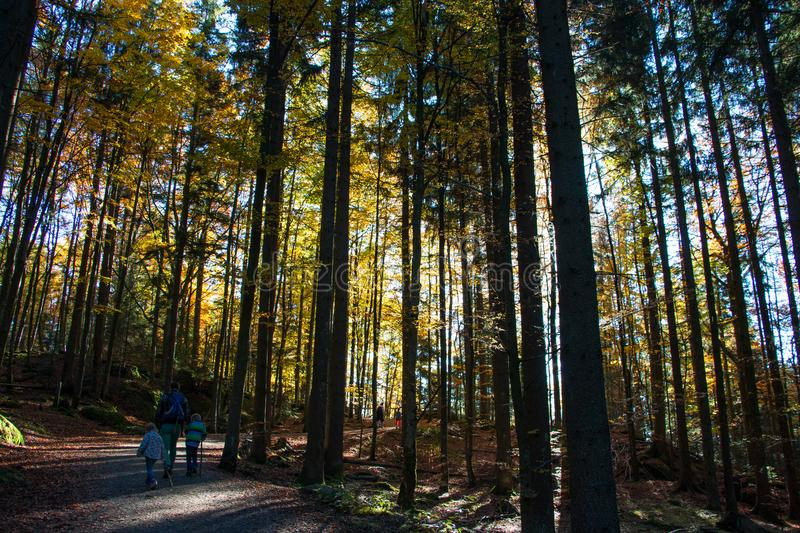 Bavarian Forest royalty free stock image