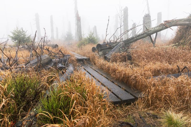 Bavarian Forest and the wooden pavements above the peat. Autumn forest in Bavarian forest national park, Germany. stock images