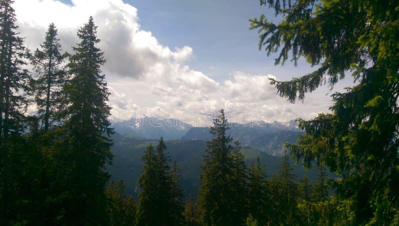 Bavarian Forrest stock image