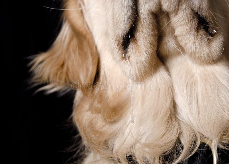 Bave de bave de chien photographie stock libre de droits