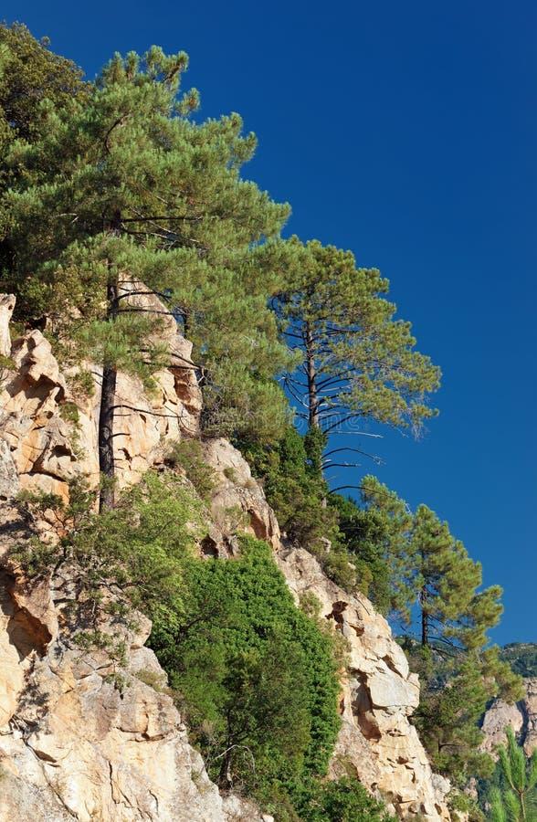 Bavella山在可西嘉岛海岛 库存图片