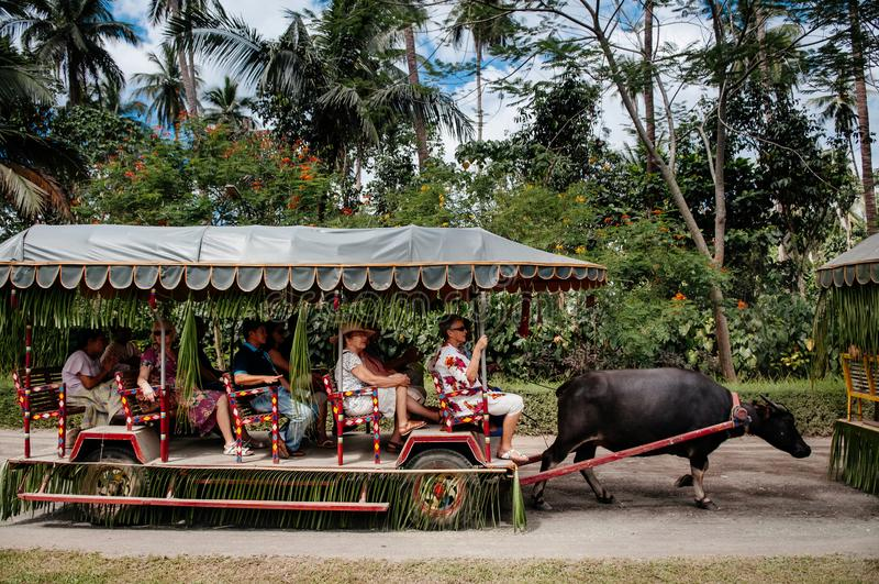 Bawół domowy fury przejażdżki willa Escudero, Tiaong, San Pablo, Filipiny zdjęcie stock