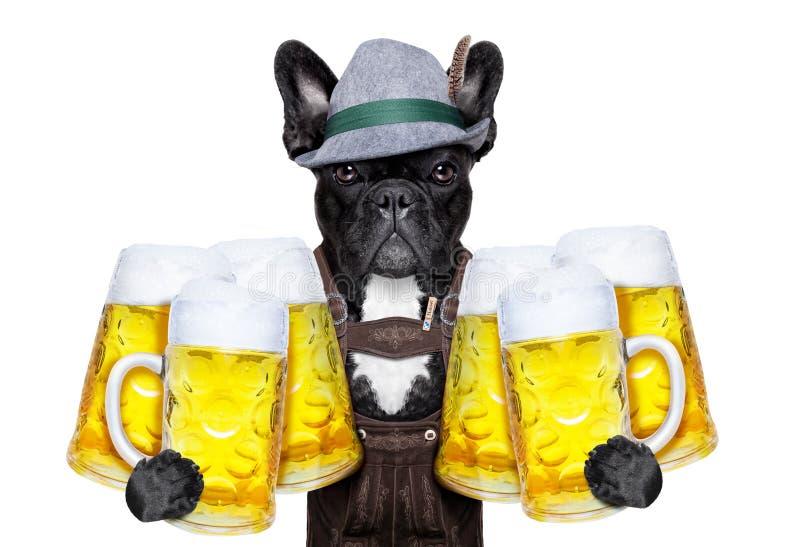 Bawarski piwo pies fotografia royalty free
