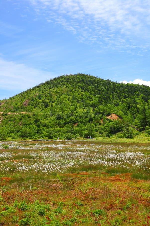Bawełniana trawa i góra obrazy royalty free