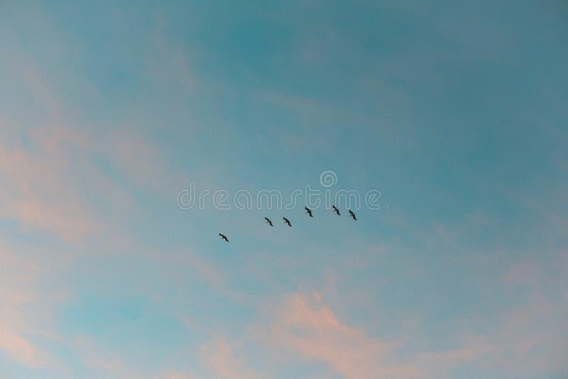 Bawełnianego cukierku niebo ft ptaki fotografia royalty free