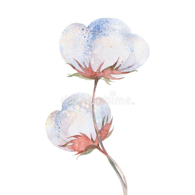 Bawełnianej rośliny kwiat ilustracja wektor