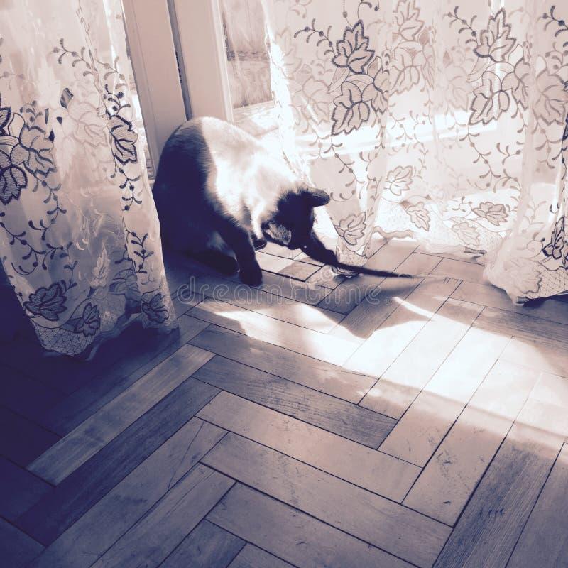 Bawić się kota zdjęcia royalty free