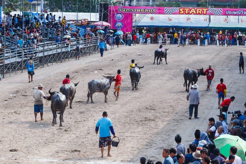 Bawoli Bieżny festiwal w Chonburi Tajlandia zdjęcie stock