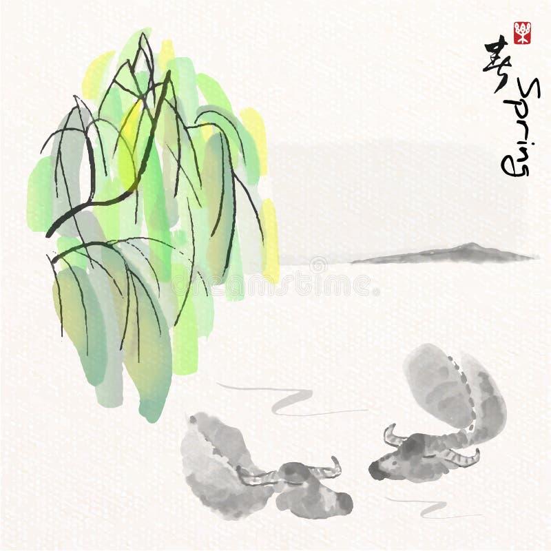 Bawoli pływacki blisko wierzbowym brzeg w rzece z Chińskiego obrazu sztuki stylem, Chińskich charakterów sposób cieszy się wiosnę ilustracja wektor