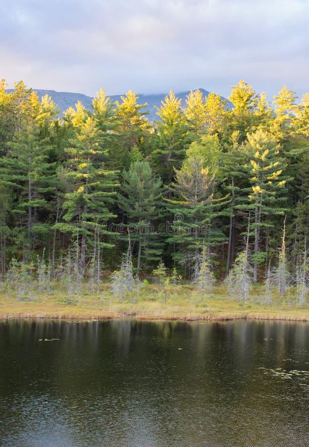 Baxter State Park Pond stockbilder