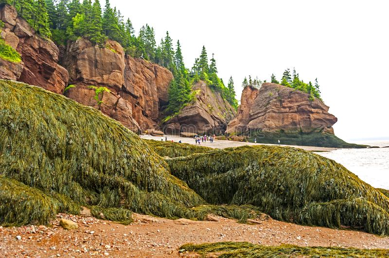 Bay of Fundy, Canada. The Bay of Fundy in Canada with the highest tides on earth is one of the natural wonders of the world royalty free stock image