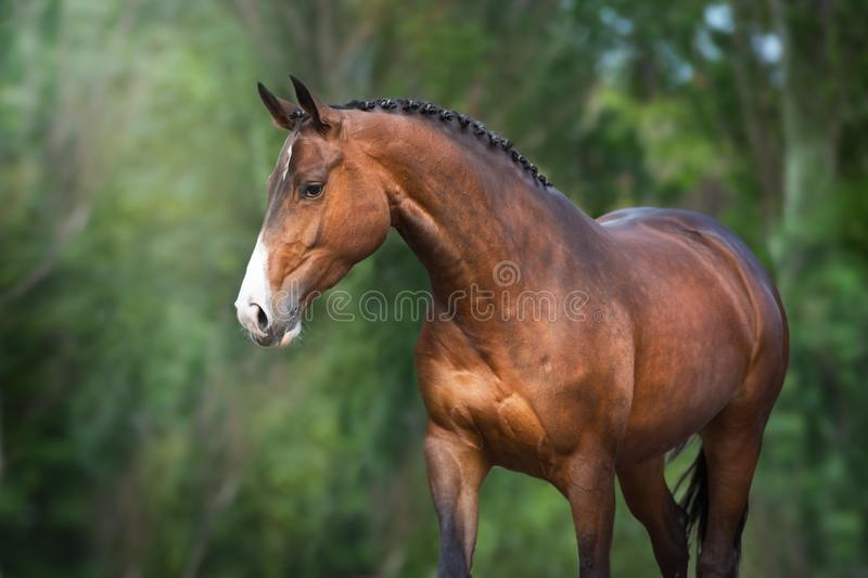 Beautiful horse outdoor stock photo