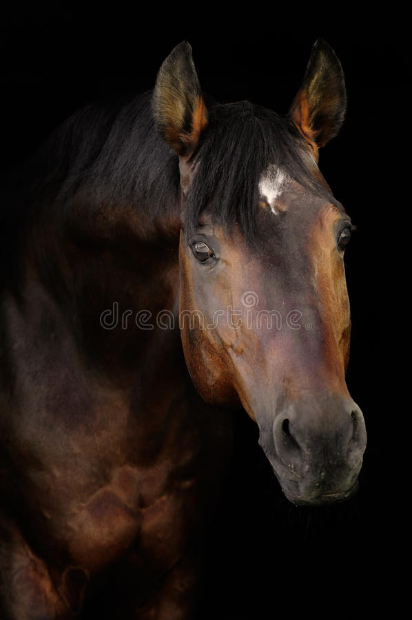 Download Bay horse in darkness stock image. Image of bend, night - 16408779