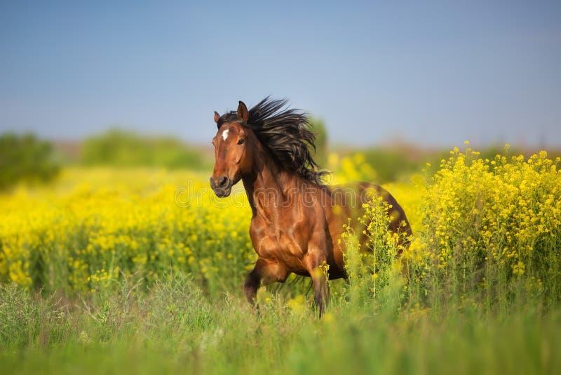 Bay horse with long mane stock photo