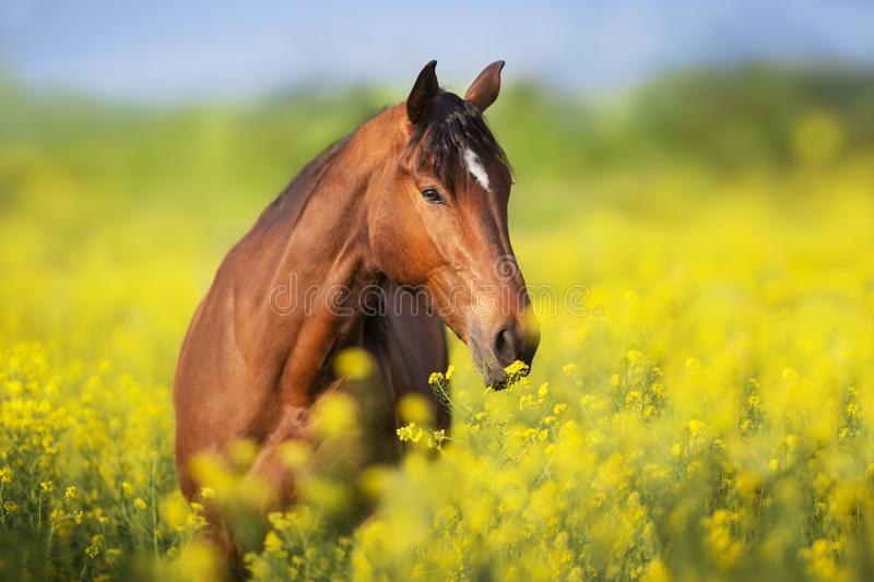 Horse in flowers royalty free stock photography