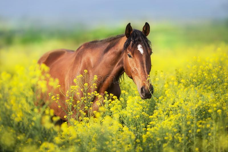 Horse in yellow flowers royalty free stock photos