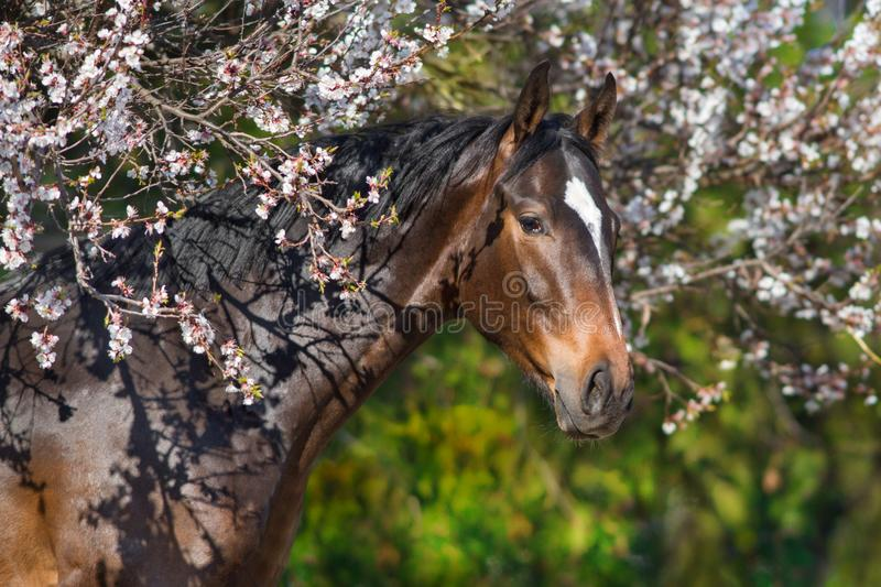 Bay horse in flowers stock photo