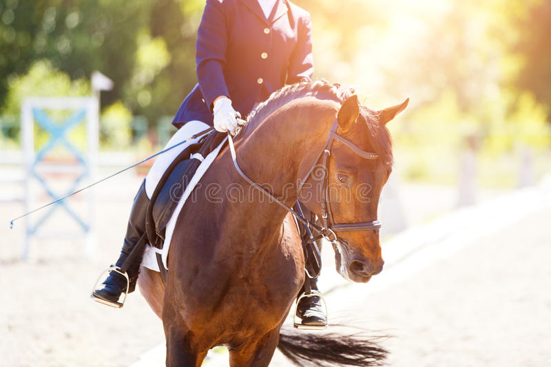 Bay horse with rider at dressage competitions. Close up image of horse with rider at dressage equestrian sports competitions. Details of equestrian equipment royalty free stock photo