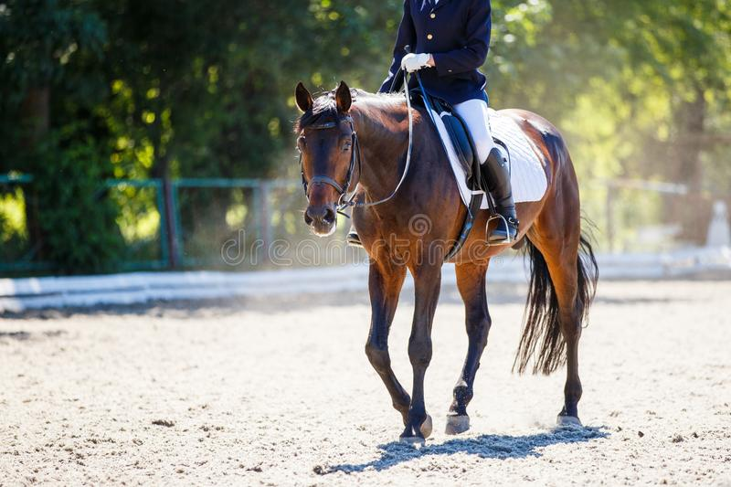 Bay horse with rider walking on dressage contest. Bay horse with rider girl walking on dressage competition. Equestrian sport background with copy space royalty free stock images