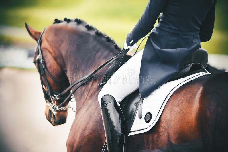 On a Bay horse in the saddle sits a rider in a blue suit and lacquered black boots. On a beautiful Bay horse with a braided mane in the saddle sits a rider in a stock image