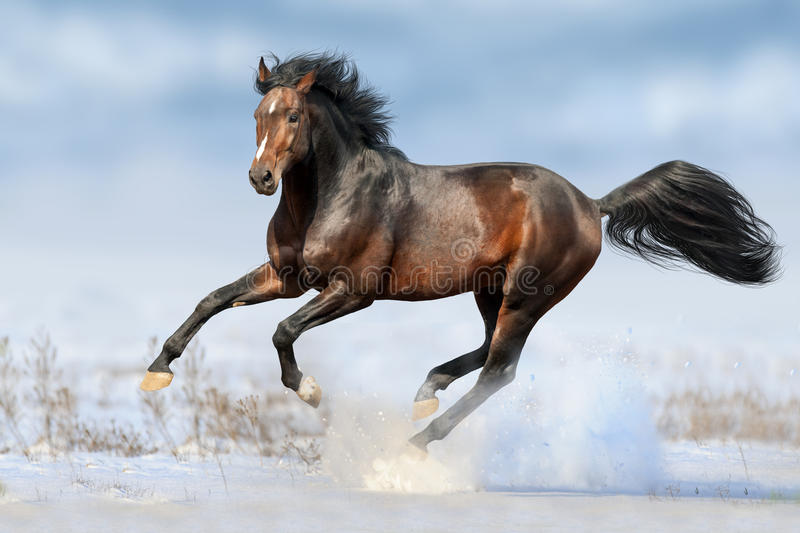 Bay horse in snow royalty free stock photos