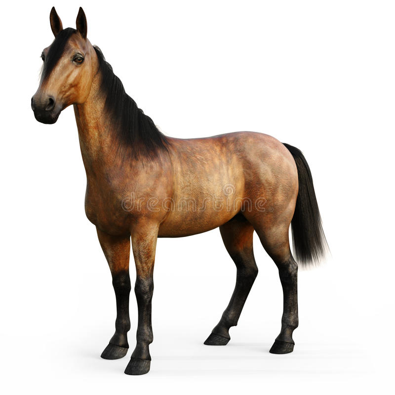 Bay horse on a white background. royalty free illustration