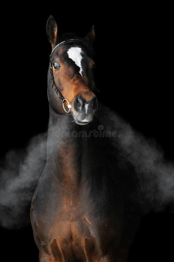 Bay horse in winter stock photos
