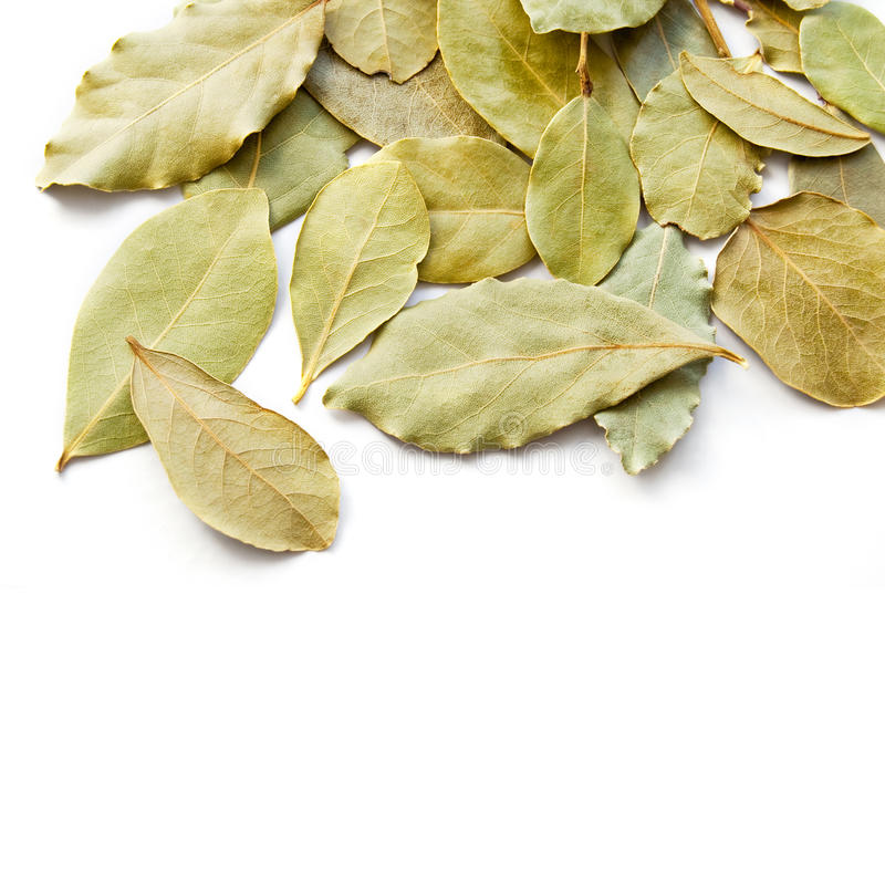 Bay laurel leaves. On white background royalty free stock photo