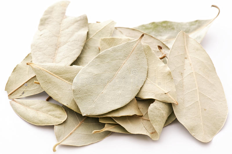 Download Bay Leaf stock photo. Image of green, tree, dried, laurus - 18611882