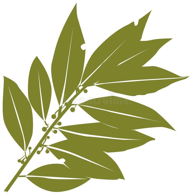 Free Bay-leaf Stock Photo - 4259270