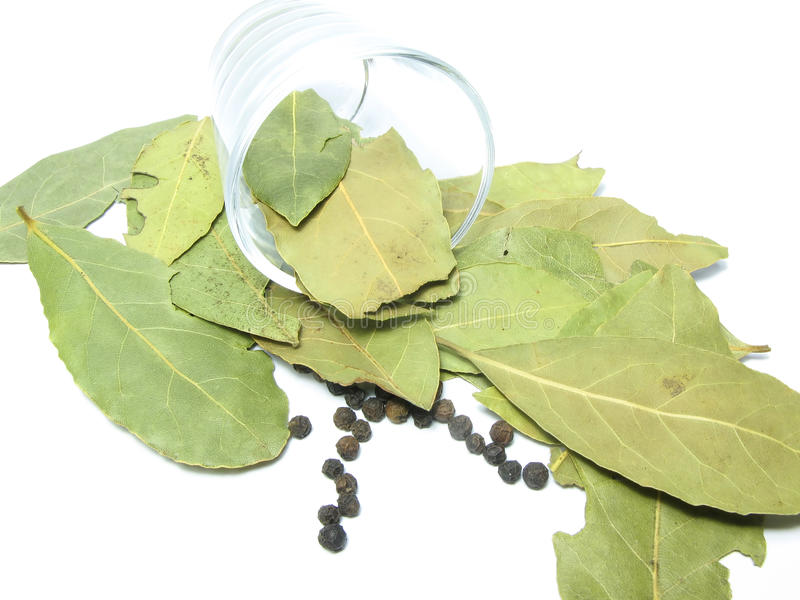 Bay leaf in a glass stock photos