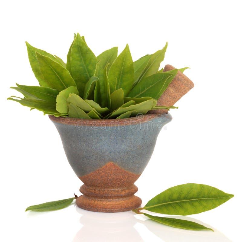 Download Bay Leaf Herb stock image. Image of ingredient, mortar - 13104085