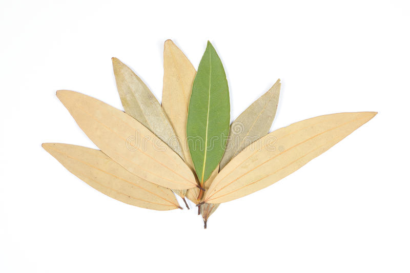 Bay leaf herb spice royalty free stock images
