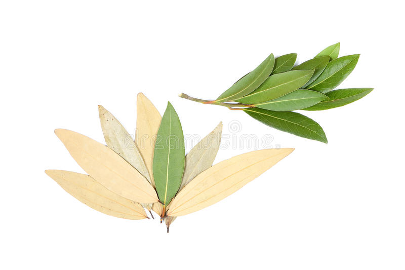 Bay leaf herb spice stock photos
