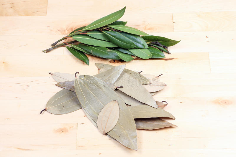 Bay leaf herb spice stock images
