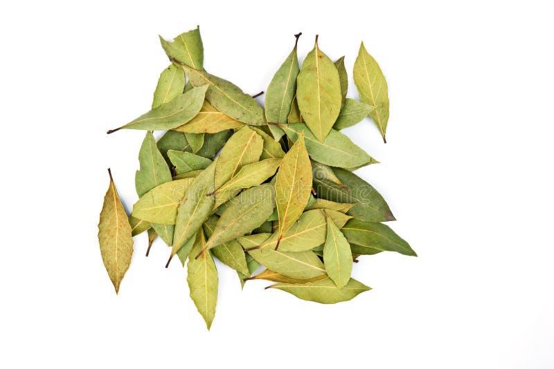 Bay leaf stock photo