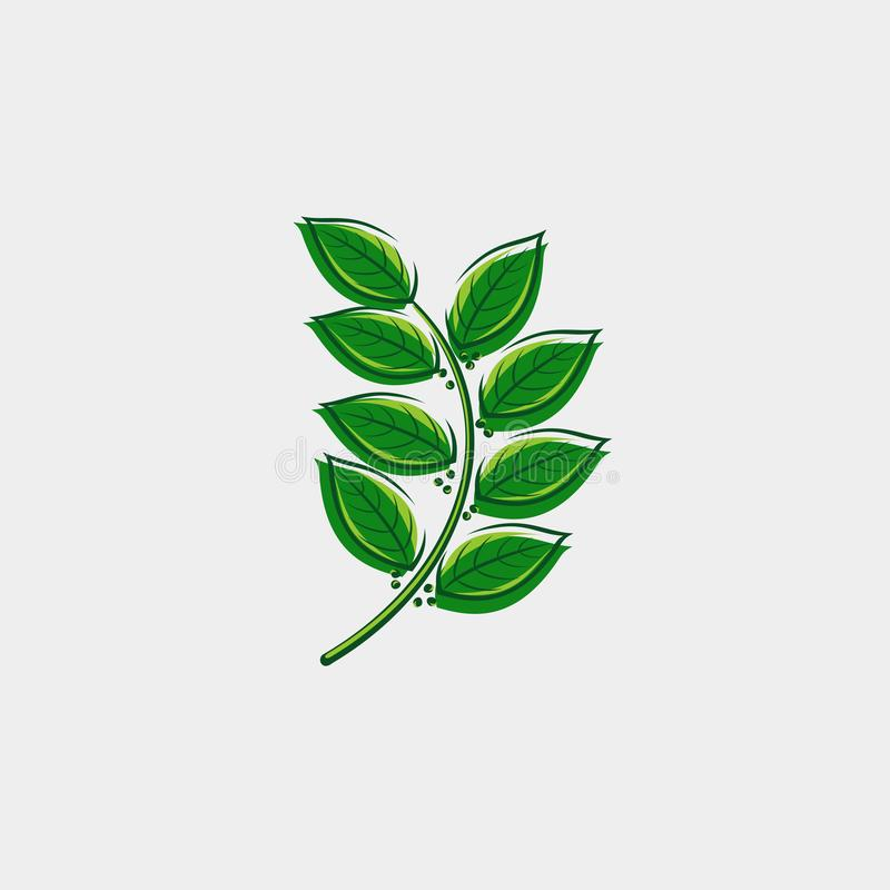 Bay leaf set. Collection icon bay leaves. Vector royalty free stock photos