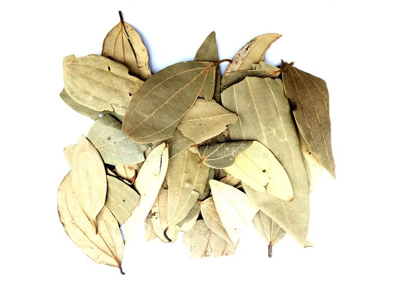 Bay leaf on white background. Many uses for advertising, book page, paintings,printing,mobile backgrounds, book,covers,screen savers, web page,landscapes stock photo