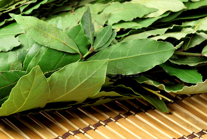Download Bay Leaves Royalty Free Stock Photography - Image: 11673807