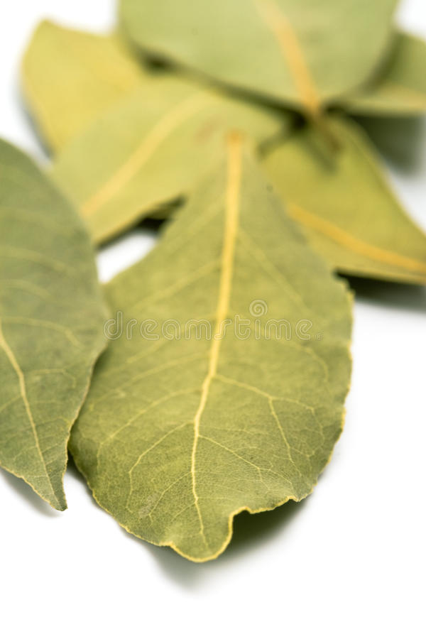 Download Bay leaves stock photo. Image of evergreen, dried, green - 12684058