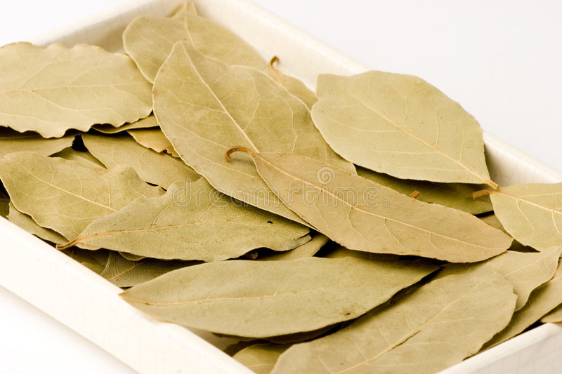 Download Bay Leaves Stock Images - Image: 1410924