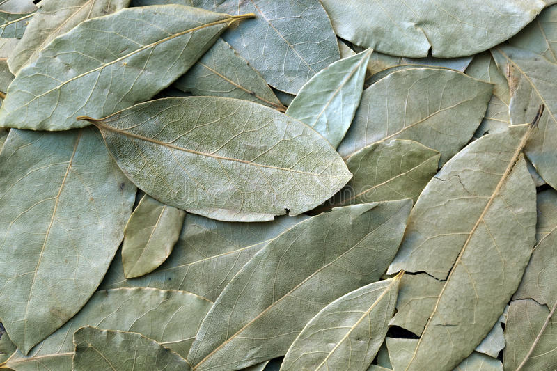 Download Bay Leaves stock image. Image of textured, food, overhead - 14860983