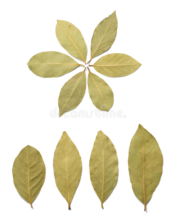 Download Bay leaves stock image. Image of leaves, ingredient, aromatic - 17905033