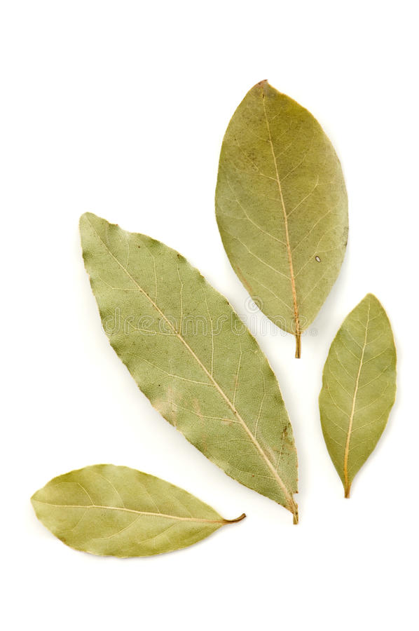 Download Bay leaves stock image. Image of dried, background, leaf - 23422443