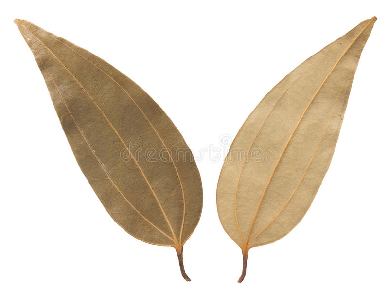 Download Bay leaves stock photo. Image of preserved, food, uncooked - 24111932