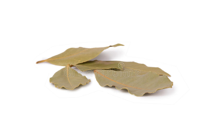 Download Bay leaves stock image. Image of organic, nature, plant - 26506579