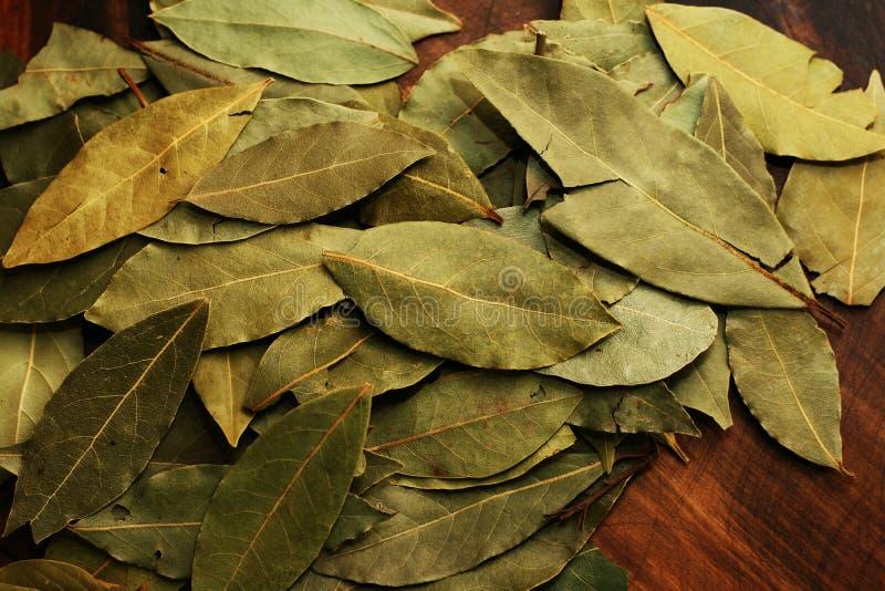 bay leaves στοκ εικόνες με δικαίωμα ελεύθερης χρήσης