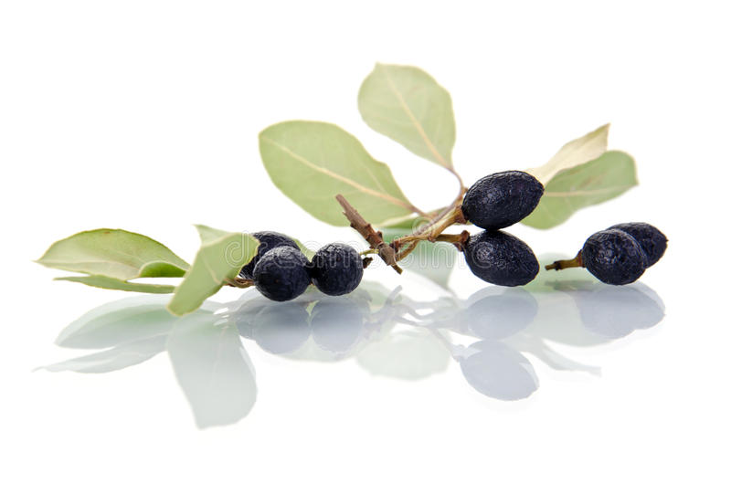 Bay Leaves With Fruits Stock Photos