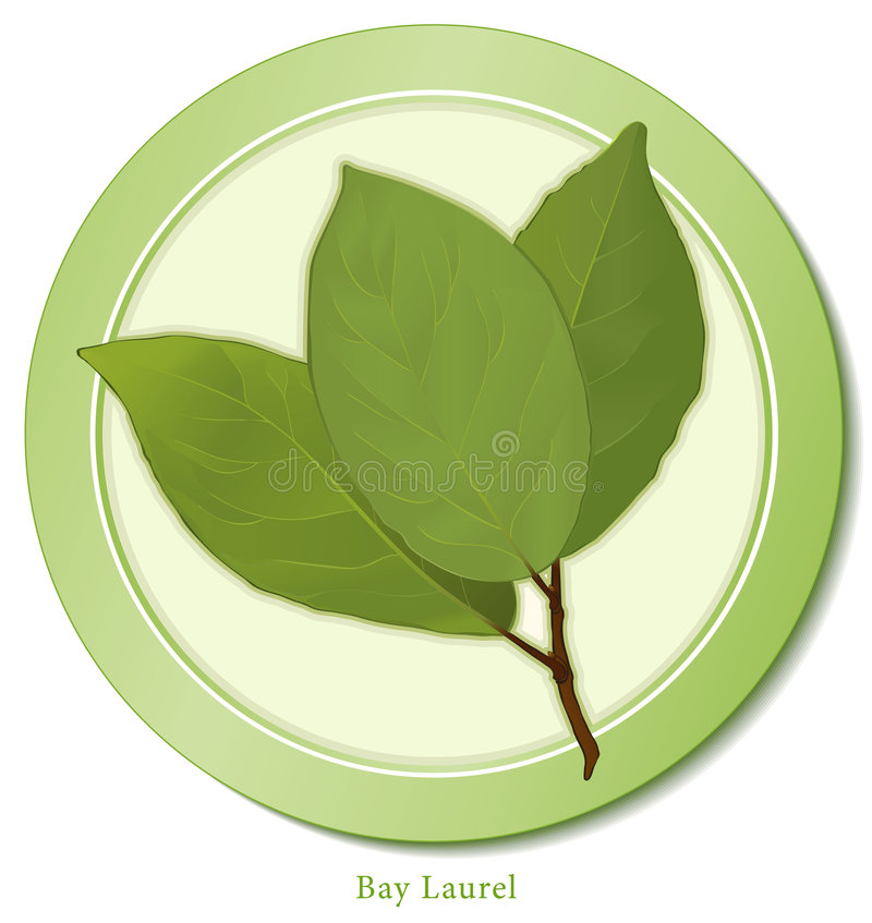 Free Bay Leaves Icon Stock Photography - 8263632