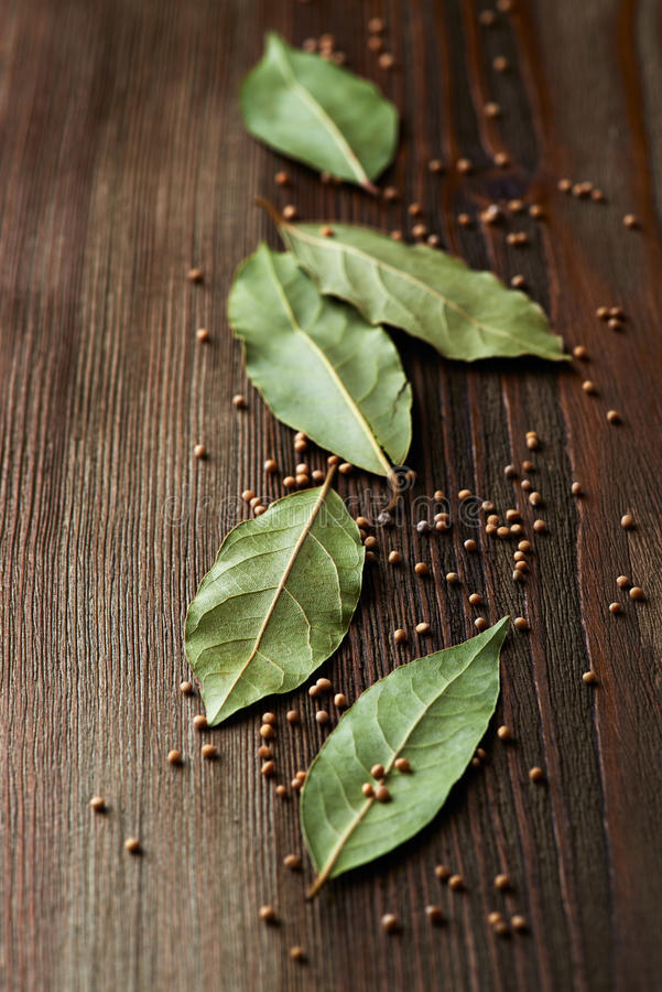 Bay leaves and mustard seeds stock image